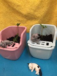 貓便當菜 植栽組彩紅包(四個一組)