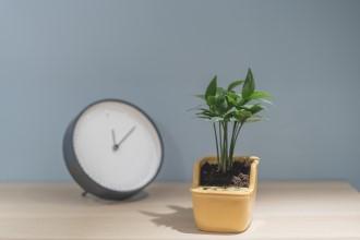 植栽時鐘h220.jpg